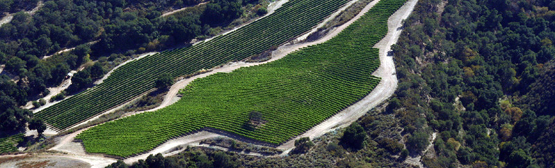 Pisoni Vineyard