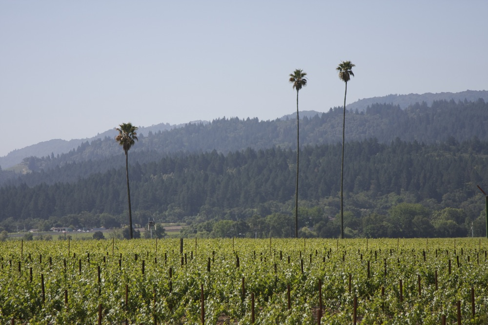 Three-Palms-Vineyard-in-Calistoga